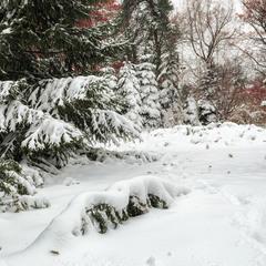 В городском саду падал снег..