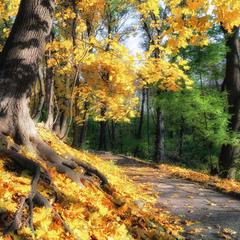 Где молодости листья не сулят...