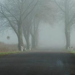 Туманные дороги