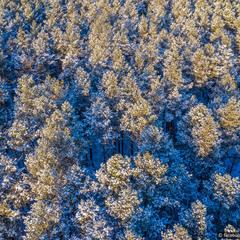 Моменти сніжної зими