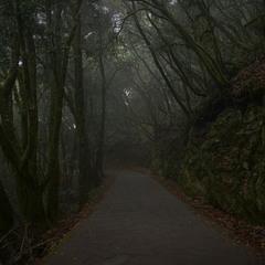 Таємничий лавровий ліс