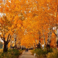 Аллея в осень