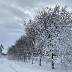 В ритме зимы