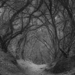 Зачарований ліс