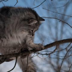 Птичка кот