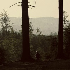 .φ...медитація у ліс.