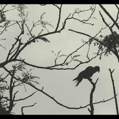 .raven.