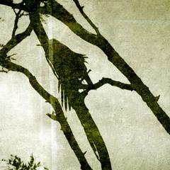 raven//