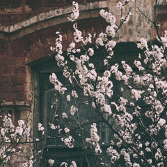 spring melody.