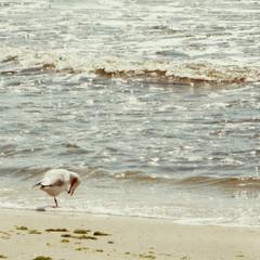 - алло! ти де? а я на морі!
