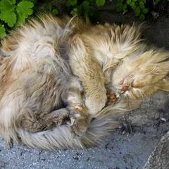 Крепко спит не тот, у кого совесть чиста, ...
