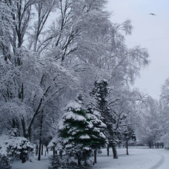 """Зима нечаянно нагрянет ..."""