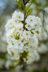 Хоть десь весна