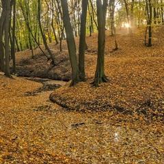 Голосіївська осінь
