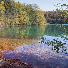 Палые листья в прозрачной воде