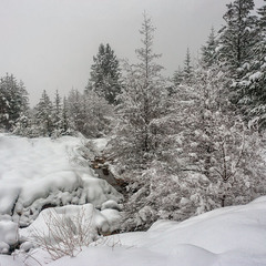 Пухнаста зима