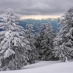 О прошедшей зиме и растаявшем снеге