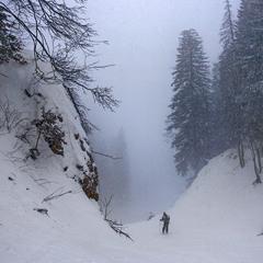 В снежную мглу