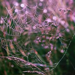 В ранкових травах лугових