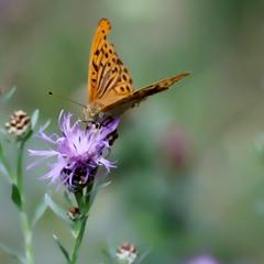 Бабочки — это цветы, которые сорвал ветер.(с)