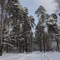 Холодно в лесу зимой.... но как красиво
