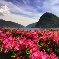 Charming Lugano