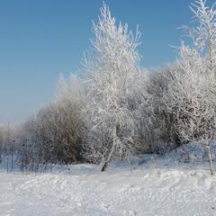 Омріяна зима. Архів