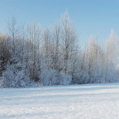 Омріяна зима. Архів 2