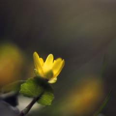 """""""Лишь цветы живут по-настоящему..."""""""