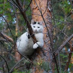 Гнездо у меня здесь.
