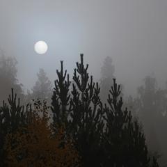 Туманное утро...