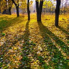 Осень стоит за тенями.