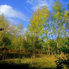 ОсеньI.Первые жёлтые листья.