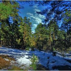 Зима в лесу.