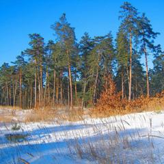 Зима на краю леса.