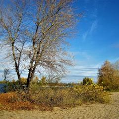 Ещё остались листья на деревьях!