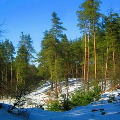 Зимний лесI
