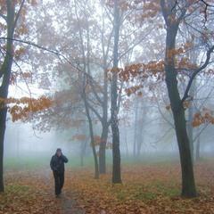 Утром парк накрыл туман вездесущий.
