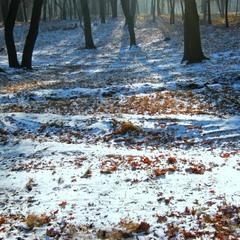 Наблюдая за первым снегом.