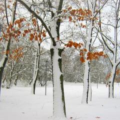 Снег, по всем приметам, шёл скорый и дружно облепил деревья.