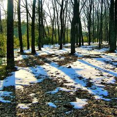 Прогулка по весеннему лесу.
