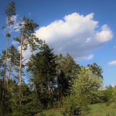Скажу стихами: за облаками - можно наблюдать часами...
