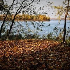 Миграция осенней листвыI