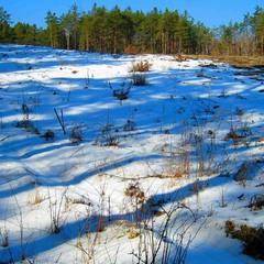 Легли косые тени на снега.