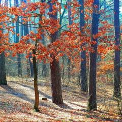 Многоцветная осень.