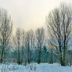 Зимнее утро.