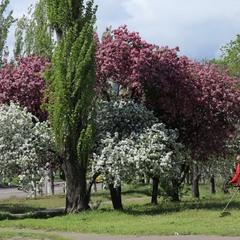 Весна, цветение.