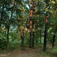 Деревья освещённые солнцем.