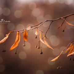 Немного Осени)