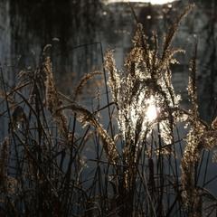 Ловцы солнечного света